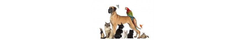 autres animaux